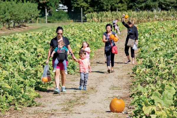 Haunted harvest: What's saving family farms