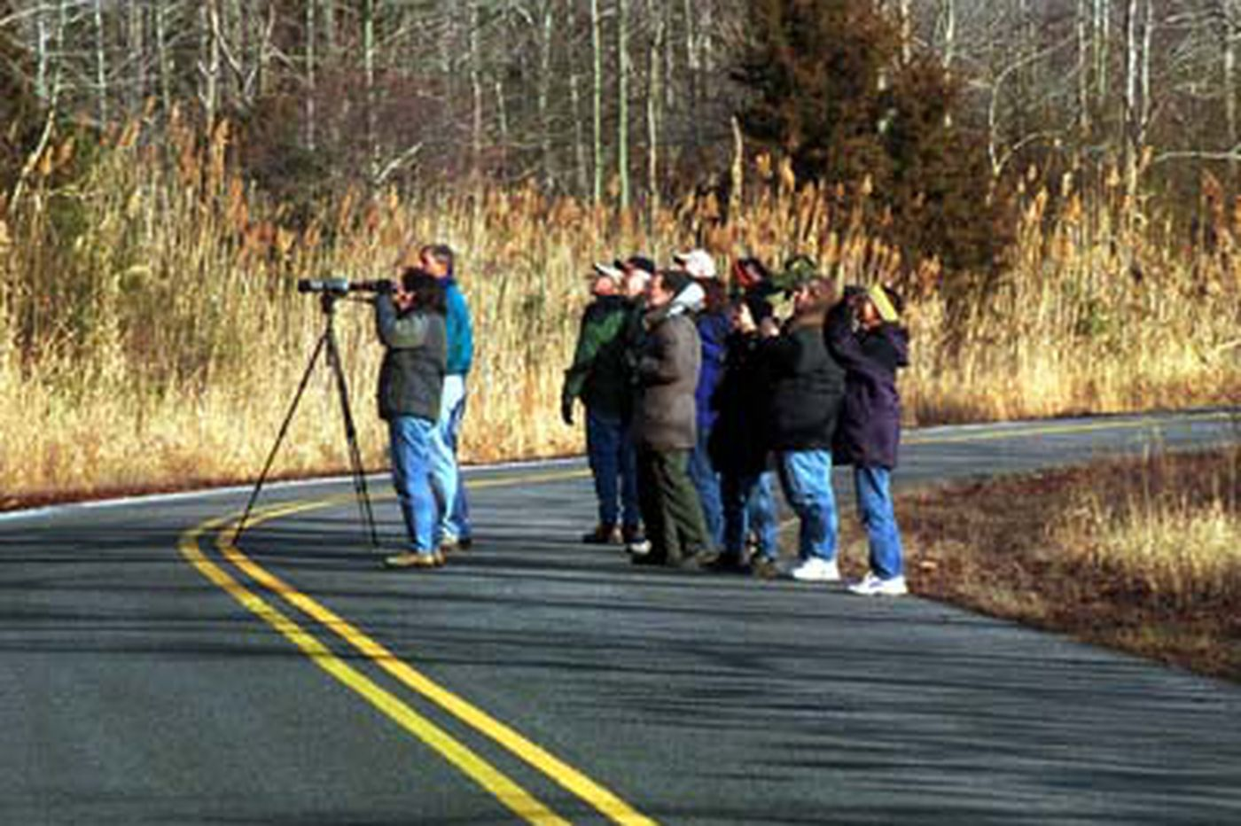 Daniel Rubin: Bird-watching as a contact sport