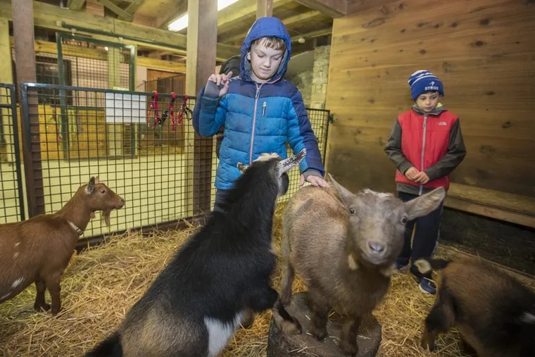 Trevor Walsh, left, who has autism, felt comfortable enough in the pen with the baby goats that he pet some of them and let the others interact with him and Nicholas Opstbaum, 9, right, during a visit to The Barn at Springbrook Farm.