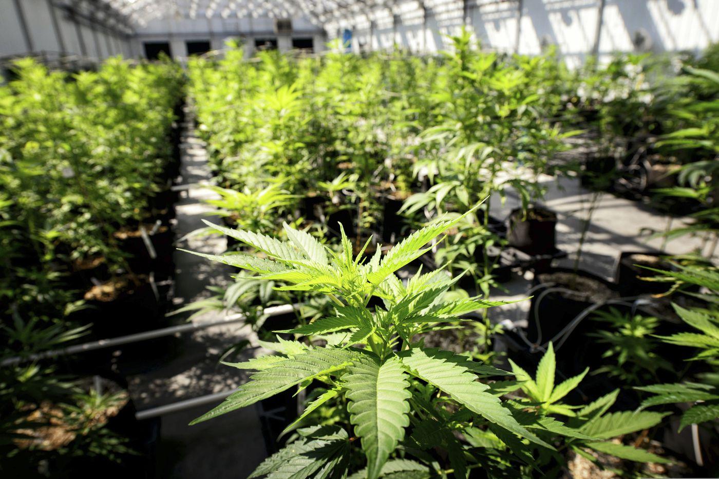 Delaware lawmakers reintroduce bill to legalize marijuana
