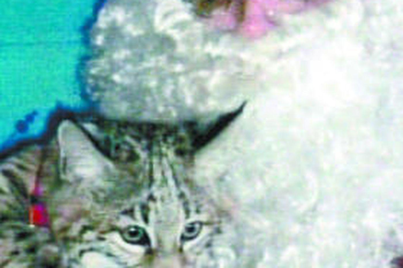Cat that bit Atlantic County 'Santa' wasn't a bobcat
