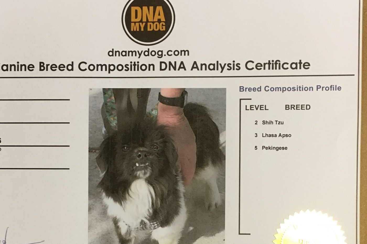 DNA testing for dogs? Think outside the bark | Stu Bykofsky