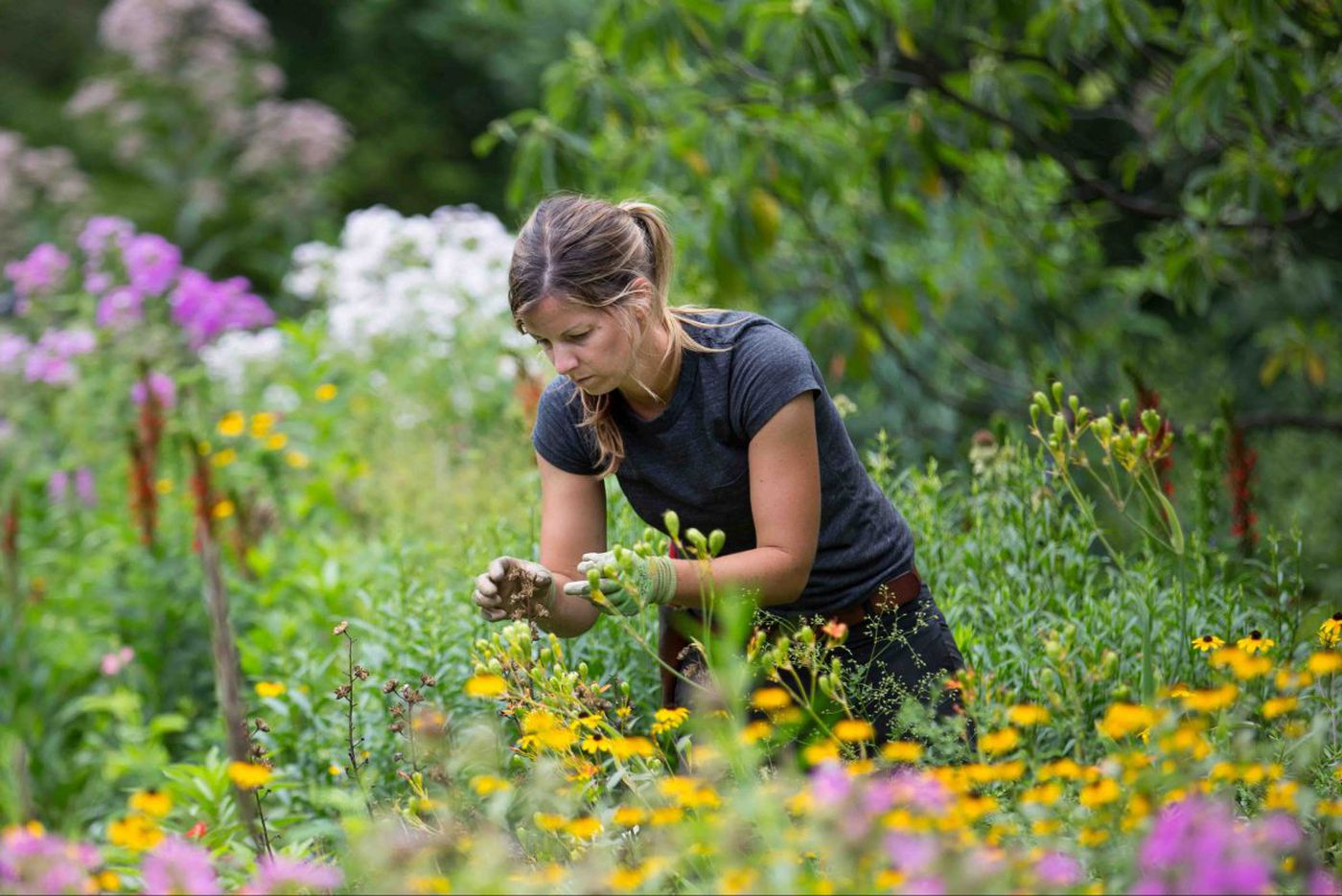 Aug 11-17: In the garden, it's time to…