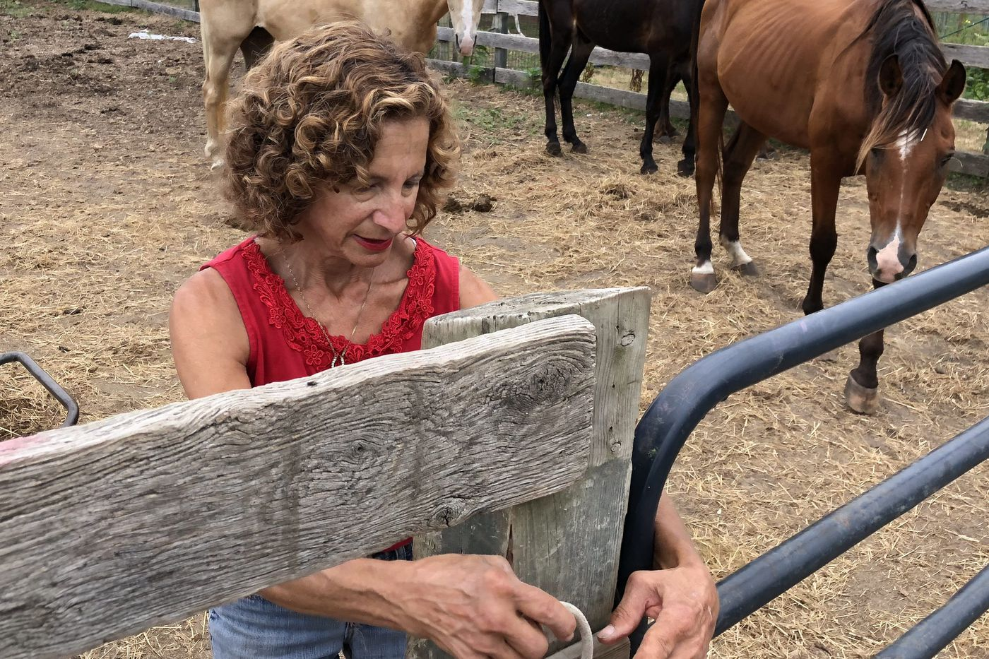 After animal cruelty charges, a call for veterinary help at a South Jersey horse sanctuary