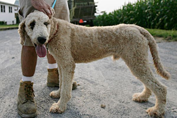 Pa. puppy mills up to old tricks