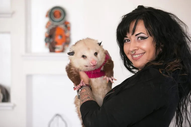 Katy DiSanto of West Philadelphia holds her tame opossum, known affectionately as Gary the Trash Cat.