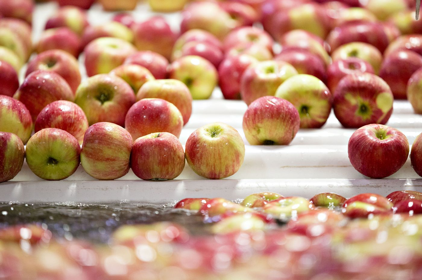 The curse of the Honeycrisp apple