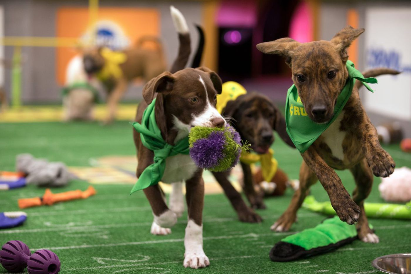 TV picks: 'This Is Us' (twice), 'Puppy Bowl XIV,' 'Animals With Cameras,' and more