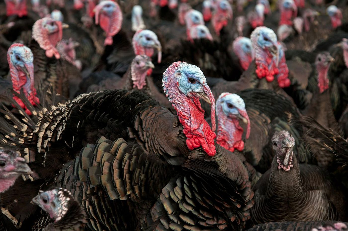 Some stuff Pa. pols should be grateful for this Thanksgiving | John Baer