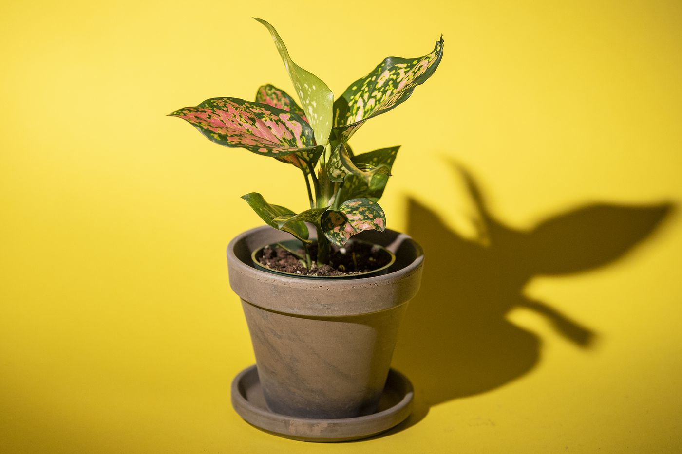 Houseplants Are Offering Therapy Amid Pandemic Stress And Demand Is Soaring In Nurseries