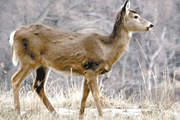 Culling reduces deer population at Valley Forge park