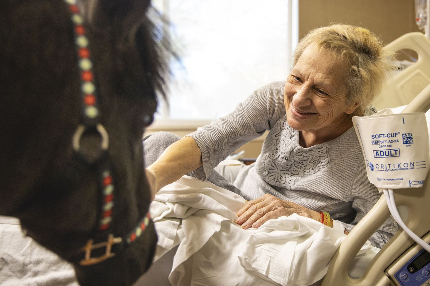 A mini horse is the newest therapy animal cheering up patients at Abington-Lansdale Hospital