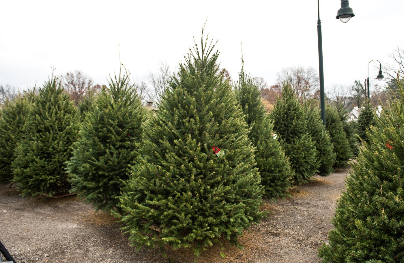How To Pick And Maintain The Perfect Christmas Tree This Holiday Season