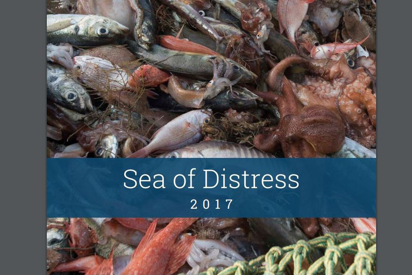 Aramark improves Greenpeace sustainable seafood score