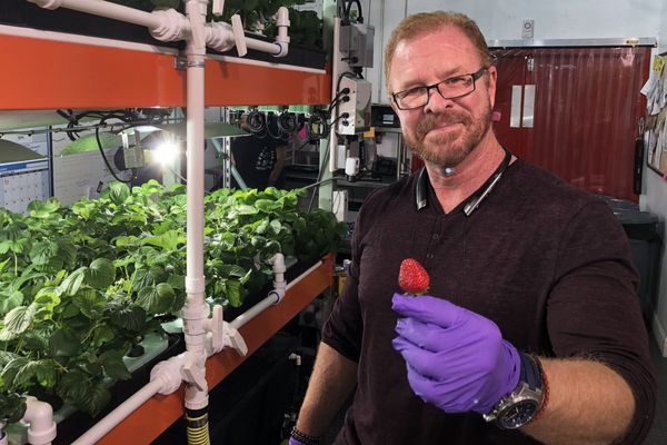 Philly's hydroponic Metropolis Farms thrives, fueled by pot and biofuel research