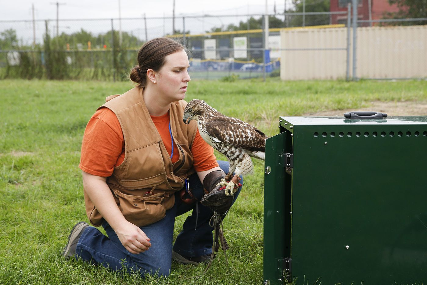 Buying frozen rats in bulk and Netflix with a hawk: The life of a falconer in Philly