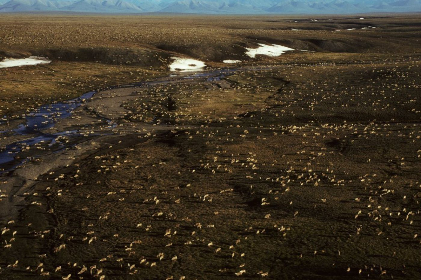 Keep drillers out of Arctic wildlife refuge | Commentary