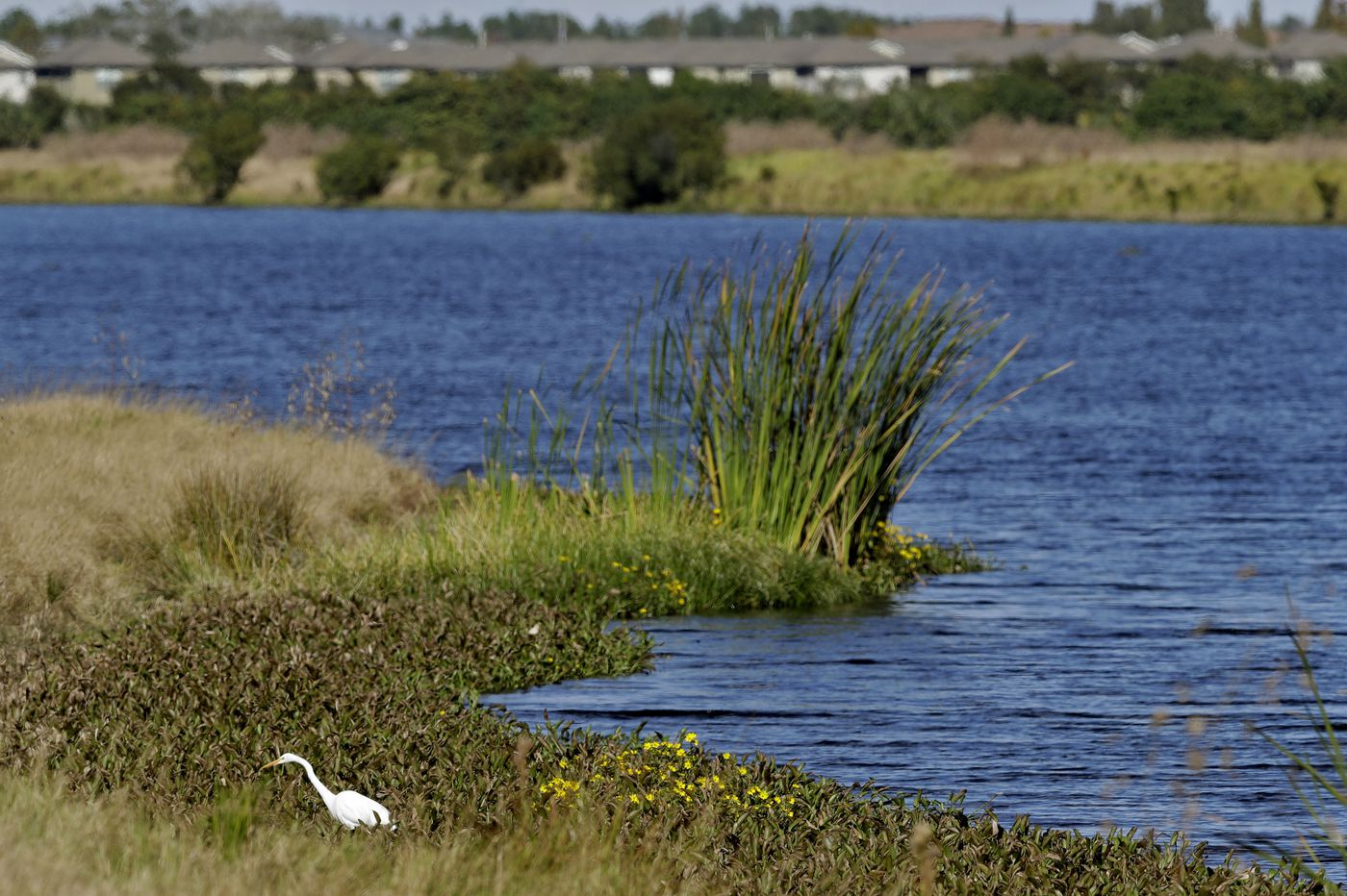 Trump aims to remove waterway protections, aiding developers