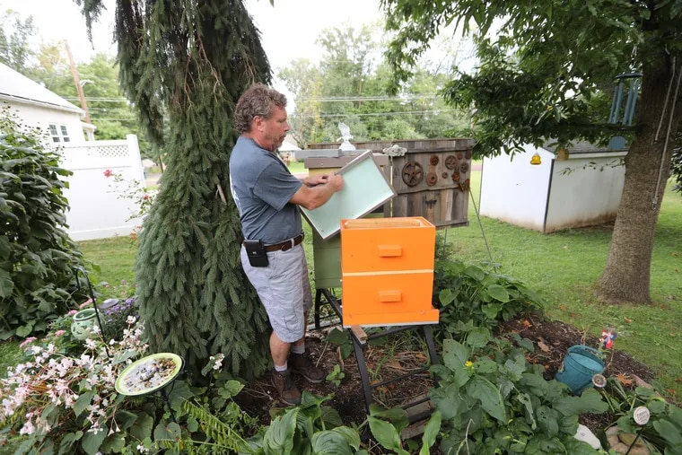 Keith Snyder, seen here in September,  spent most of the summer fighting a proposed ordinance limiting his beekeeping in Hatfield.