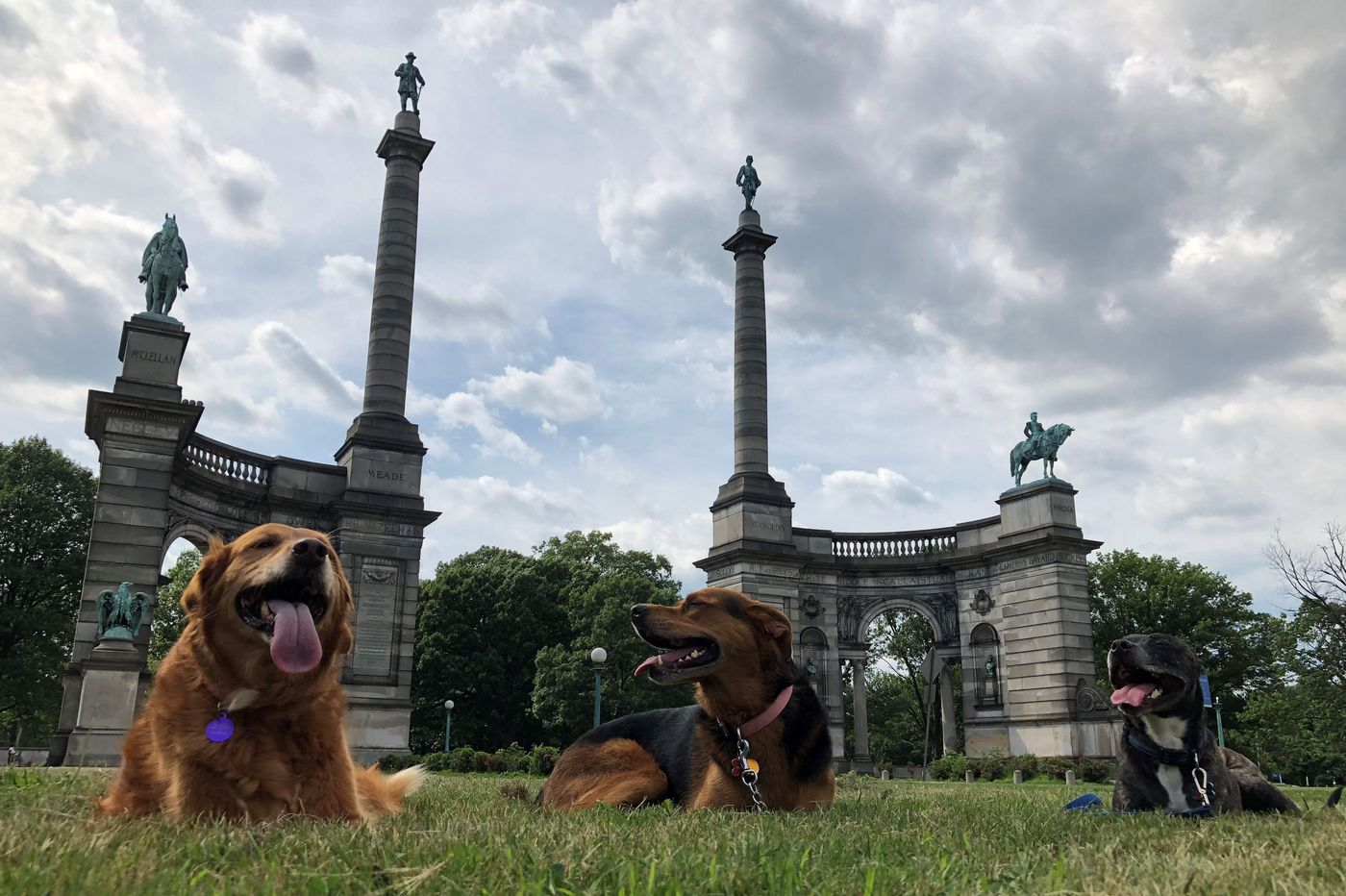 Dogs become models in the Association of Public Art's Instagram challenge