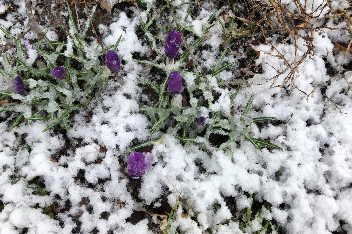 Snow on the first day of spring? The season's clock is irreparably broken | Opinion