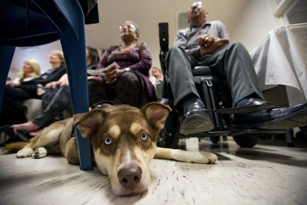 At $20,000 a pup, service dogs bark Philly military veterans back to life
