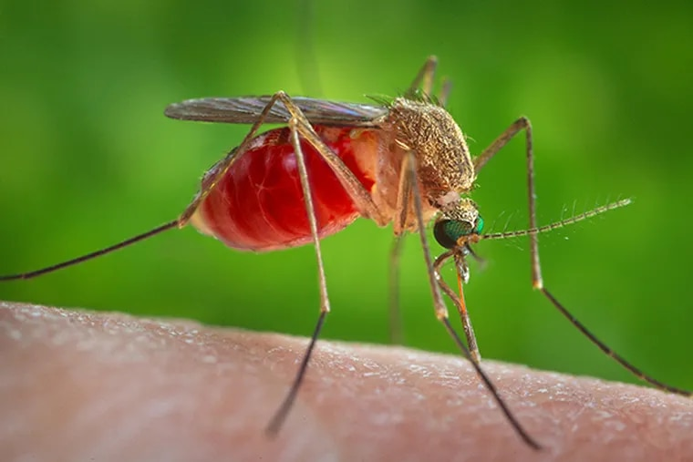 Philadelphia reported the first human case of West Nile virus for 2019.