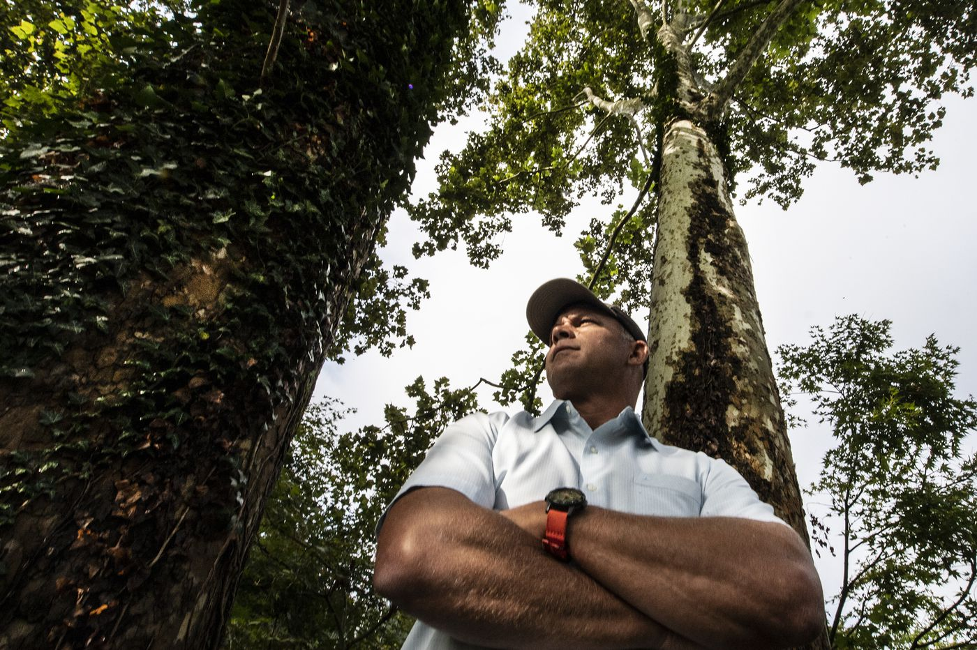 Here's advice from a self-professed tree-hugger and tree detective