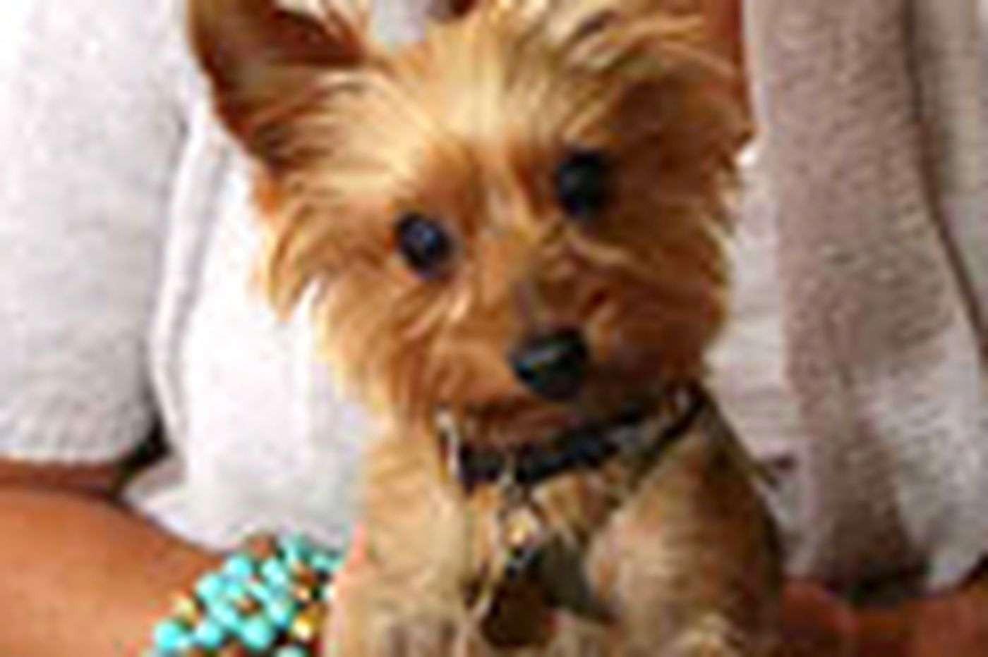 Phone services help find lost pets like Ozzie