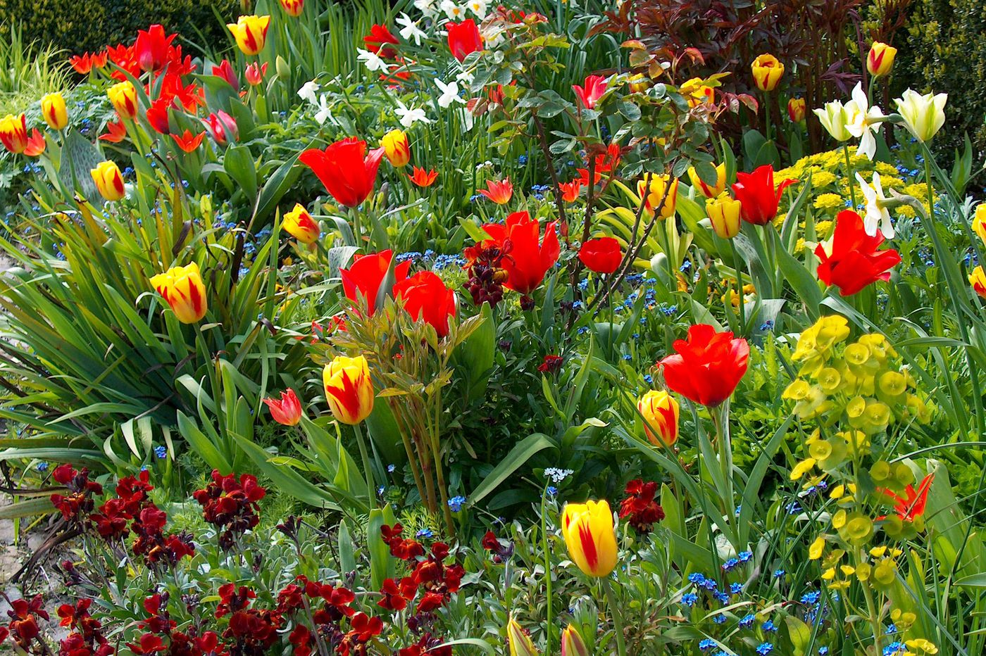 Planting bulbs offers us the glimmer of hope that we all need