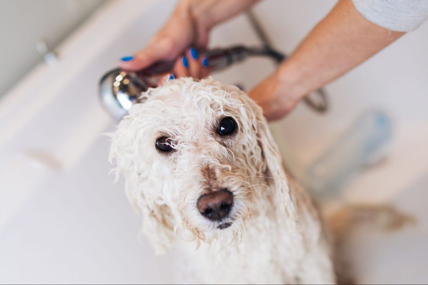 How to find good groomers for aspiring glamour pups