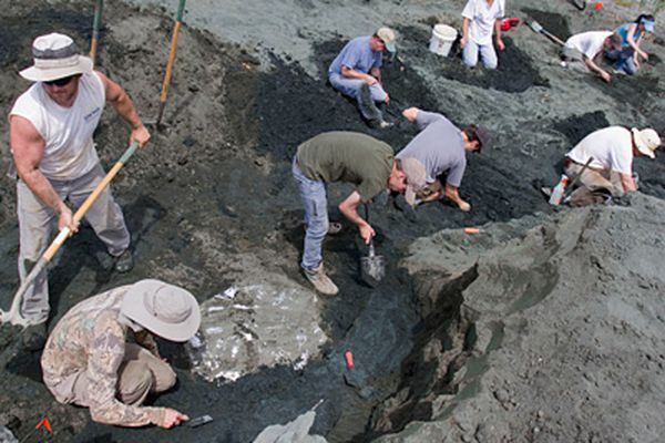 Heavy lifting in N.J.: A 65 million-year-old sea turtle