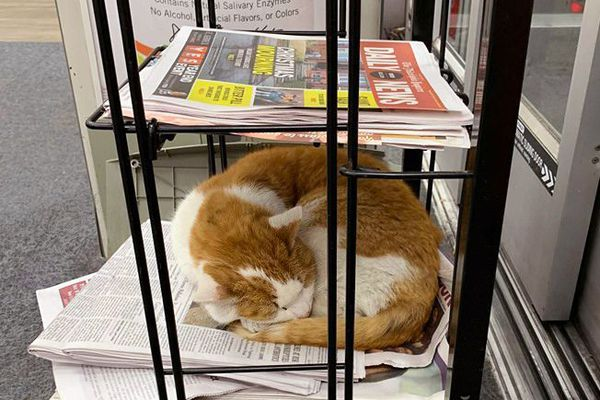 South Philly's 'CVS Cat' needs a new home