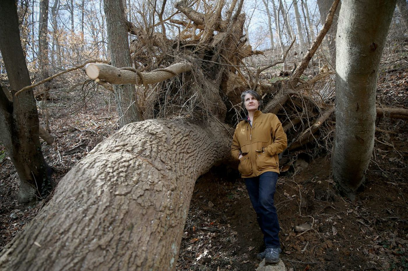 Wissahickon park trees, trails took big storm hit, and more is on the way