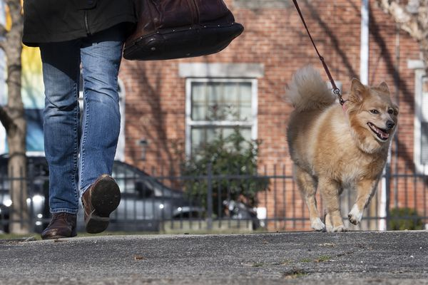 'See something, say something' was lethal to good citizen dog walker in S. Philly | Stu Bykofsky