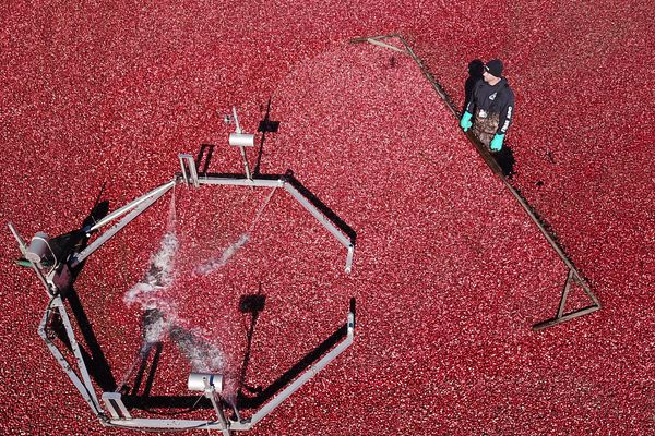 New Jersey's cranberry kings hope surpluses and tariffs don't bog them down