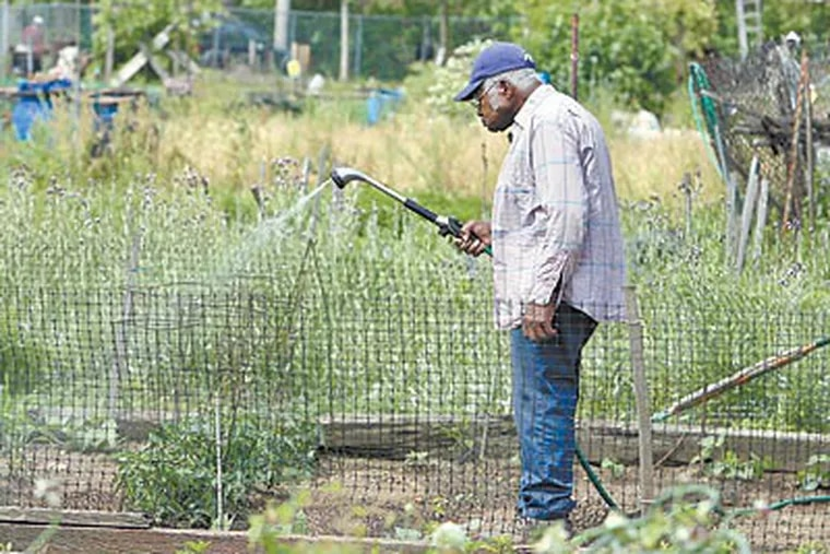 Eddie Corbitt, of Germantown, waters his plot at Glenwood Green Acres, the city's largest community garden. Of more than 400 community gardens, nine are designated Keystone Gardens. (AKIRA SUWA / Staff Photographer)