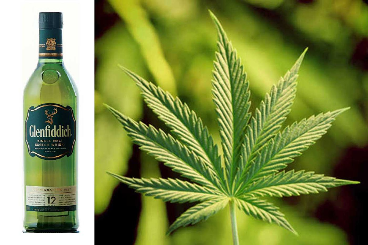 Whisky exec drops single malt for world of weed