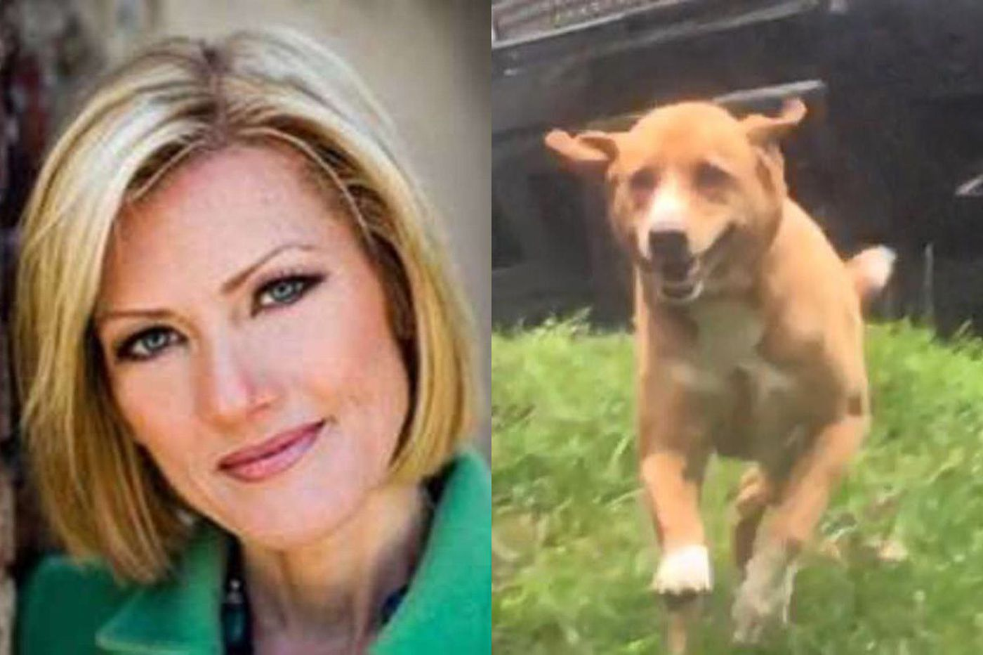 Cecily Tynan's dog fighting Lyme disease
