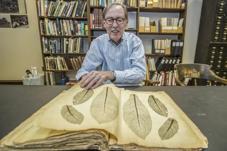 """Librarian Jim Green pages through Volume 2 of Joseph Breintnall's """"Nature Prints of Leaves"""" at the Library Company."""