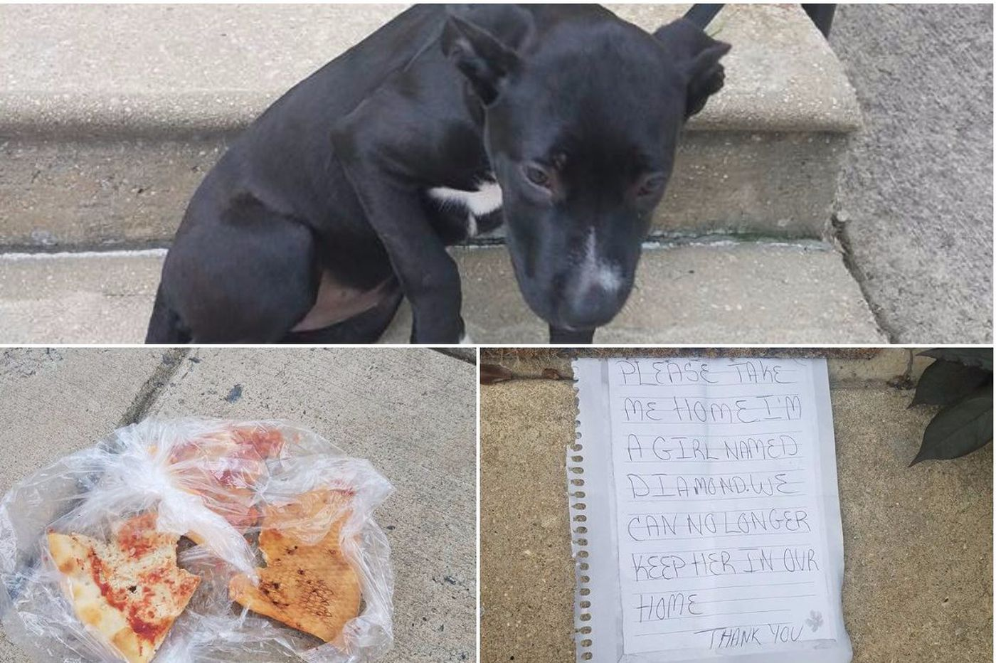 A puppy was abandoned with pizza and a note. A neighborhood Facebook group found her a new home