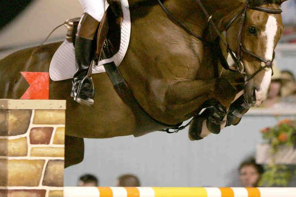 King makes sure the Devon Horse Show goes on