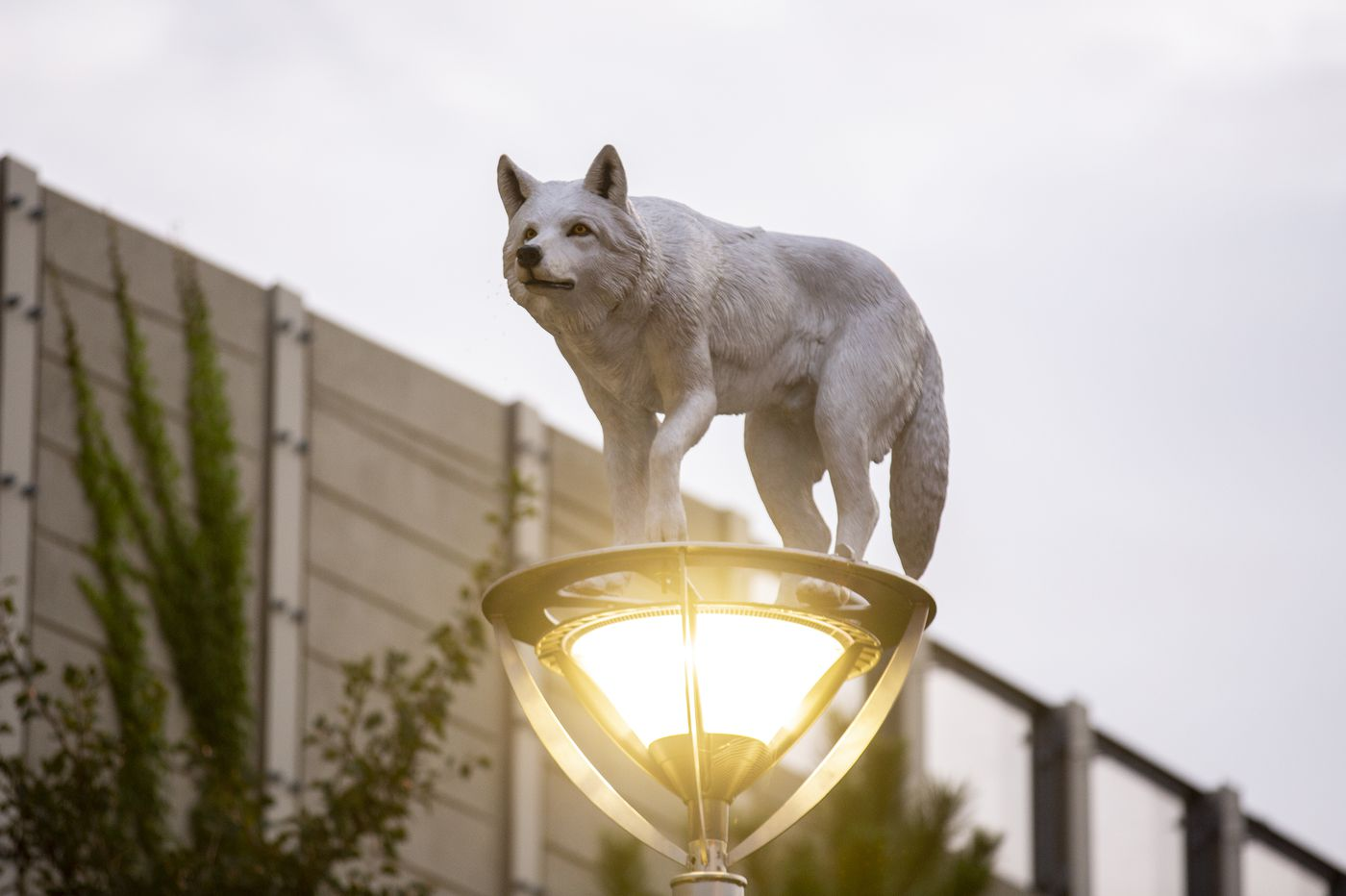 Here's why there are wolf and turkey sculptures on top of Fishtown lampposts
