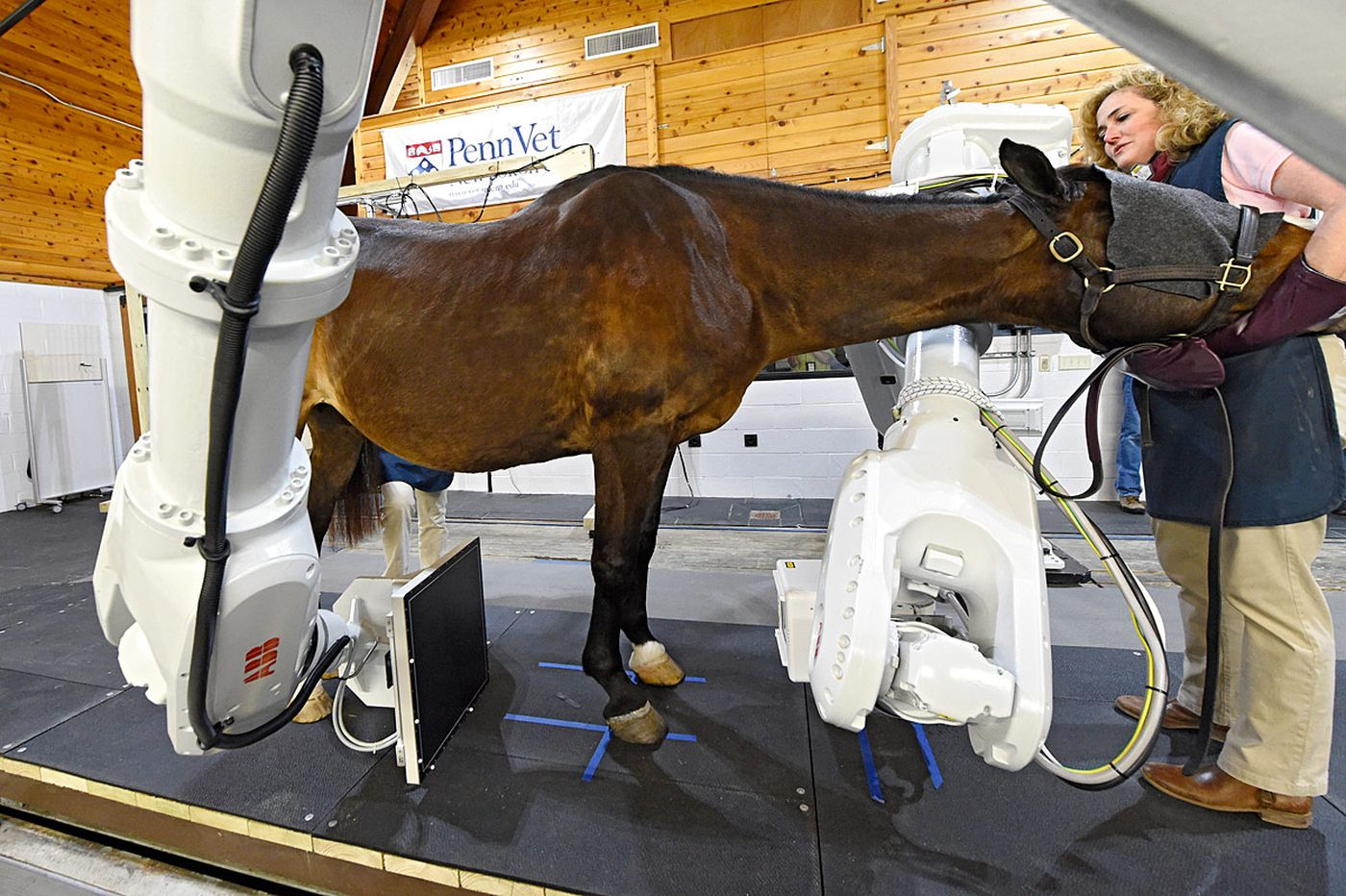 Just out of the gate: A CT scanner fit for a horse
