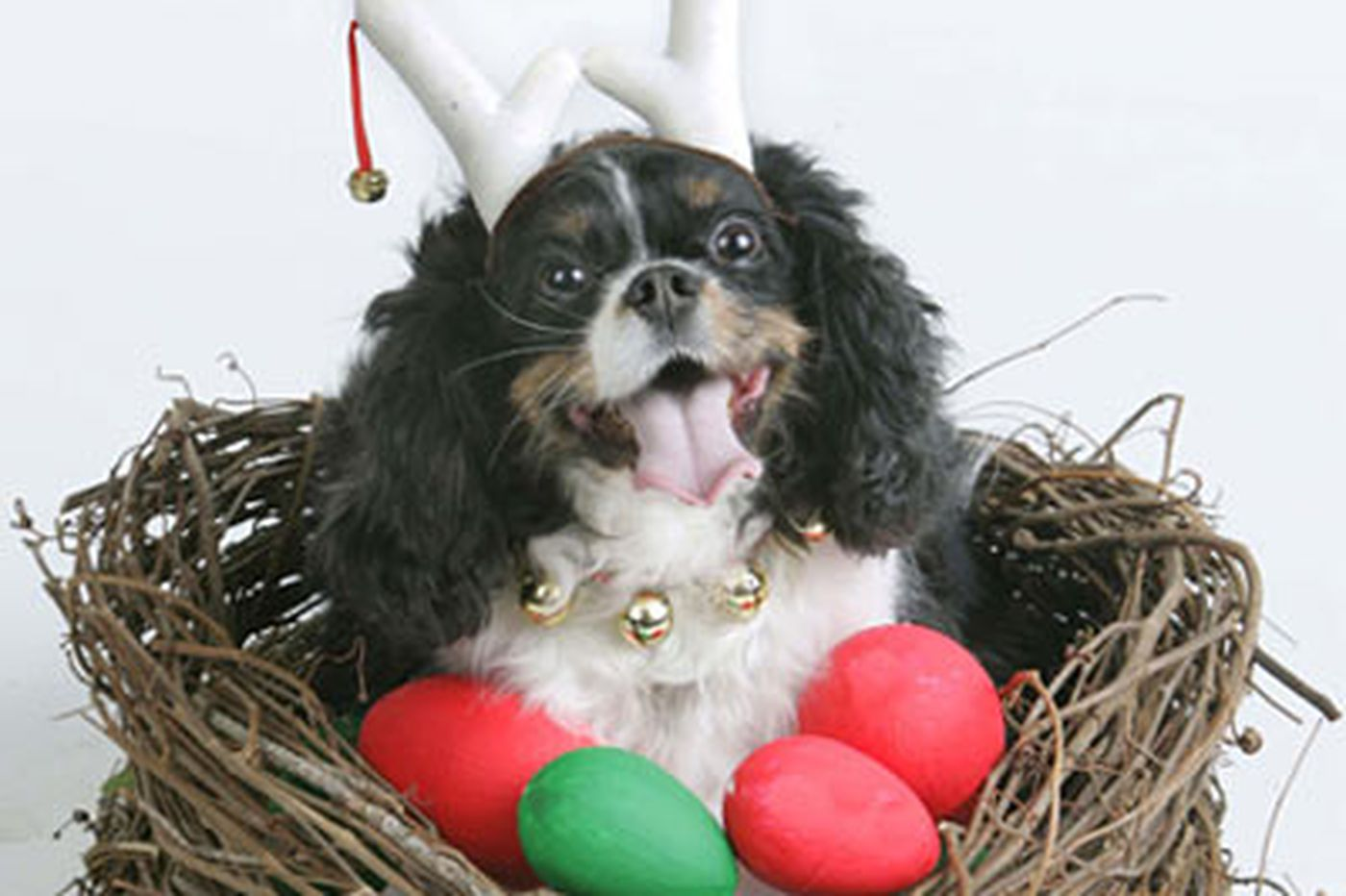 Prepare your pups for holiday celebrations