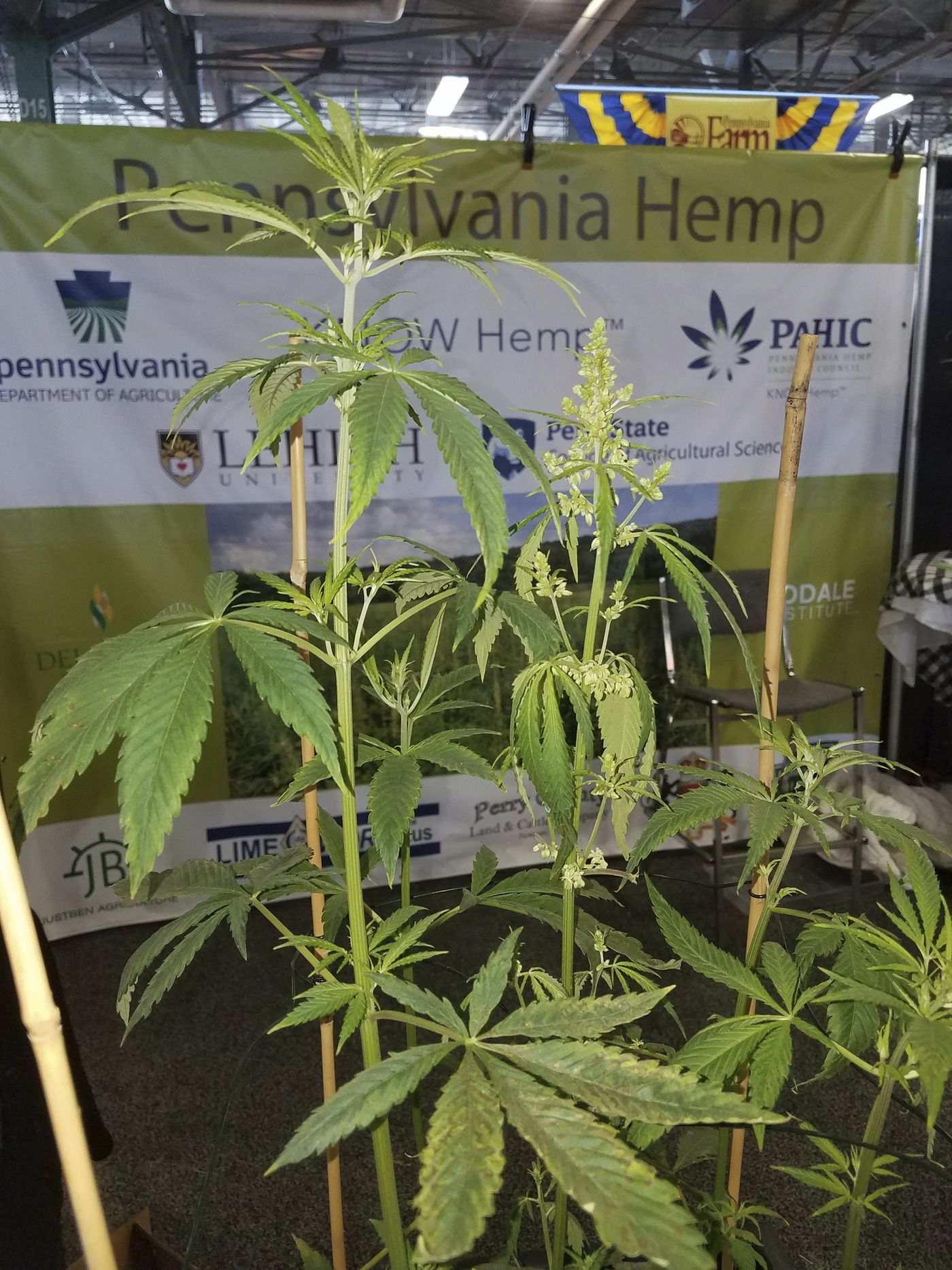 This extract is driving a hemp gold rush  But is it legal?