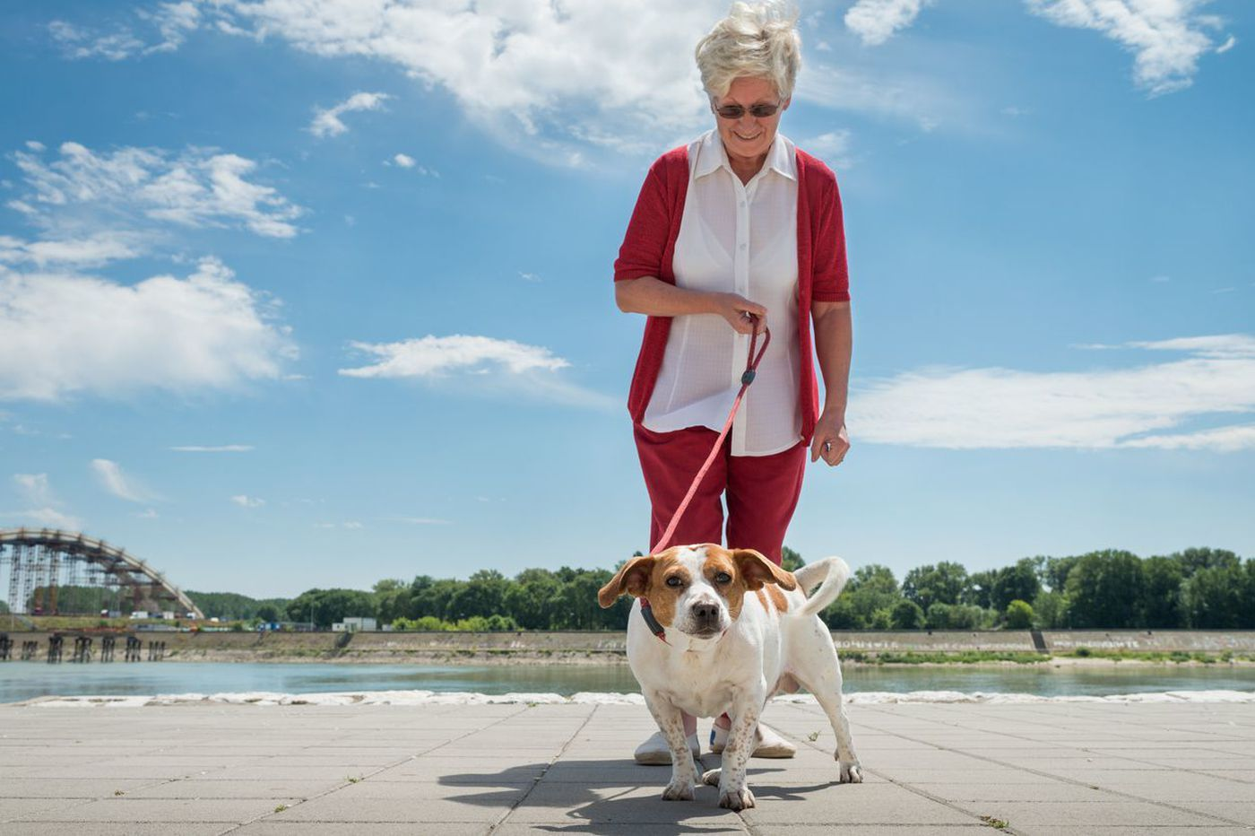 Broken bones from falls on the rise among older dog walkers