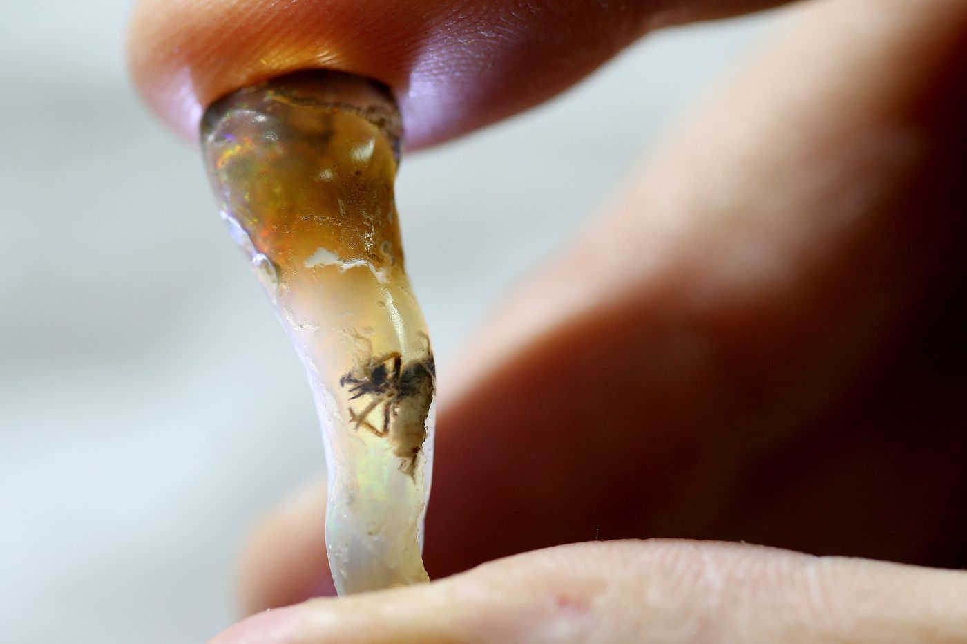 Insect trapped in precious gem is mystery for Bucks County dealer, scientists