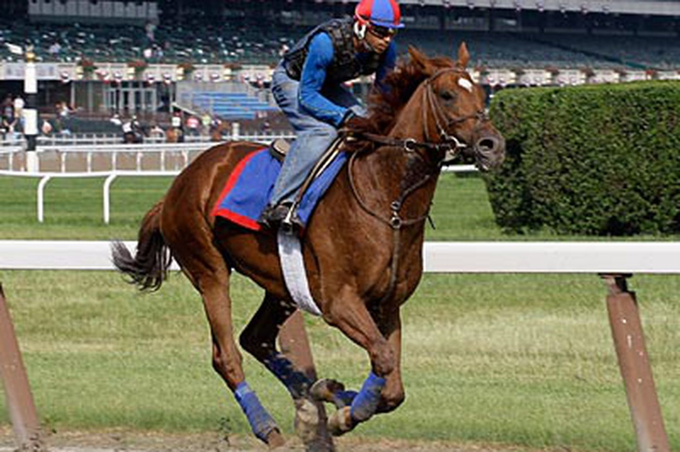Animal Kingdom, Shackleford head great Belmont Stakes field