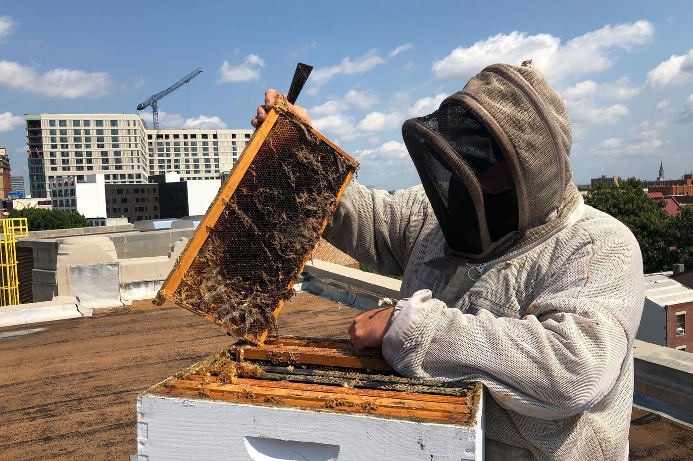 A beekeeper and restaurant rally to save a North Broad synagogue's rooftop apiary